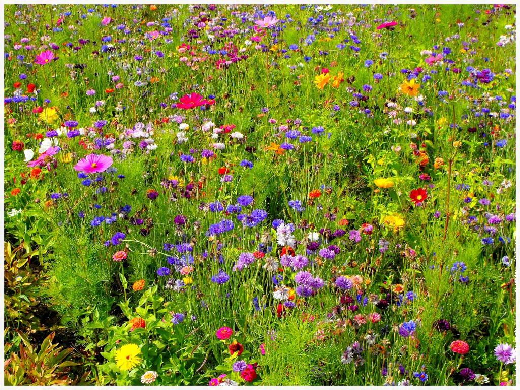 Compte rendu du 26 f vrier 2015 jardin communautaire for Le jardin des fleurs