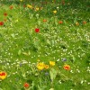 Compte rendu du 16 octobre 2014 jardin communautaire