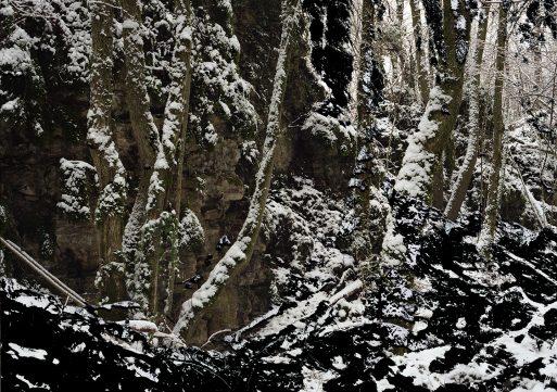 « Le génie des arbres, extraits 1983-2013 », Jean Luc Tartarin  Du 2 décembre 2017 au 18 février 2018